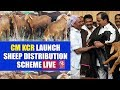 CM KCR Launches Sheep Distribution Scheme | Kondapaka | V6 News