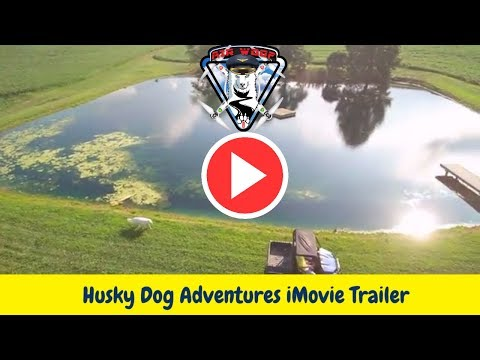 Husky Dog adventures - our drone -AirWooFOne iMovie Trailer