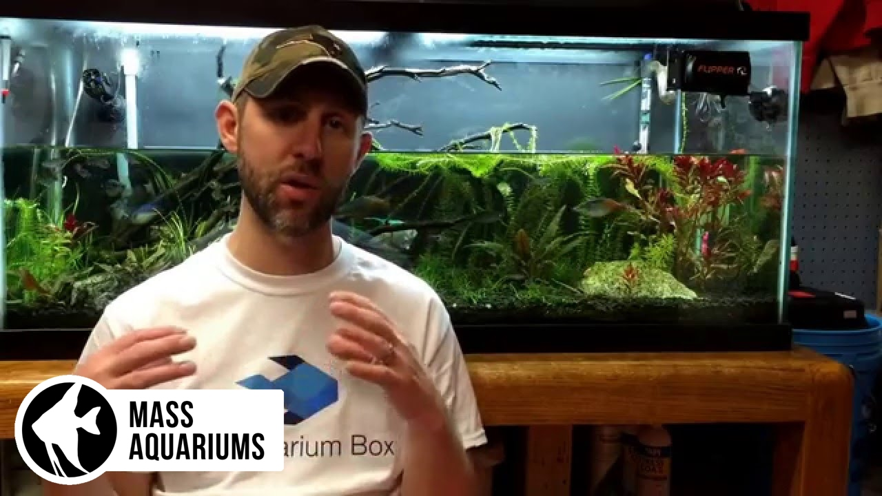 how to remove nitrates from your aquarium 3 steps to balance