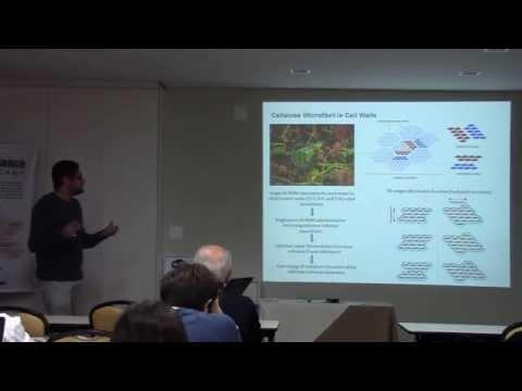 Nanoarchitecture of Plant Cell Walls - Rodrigo Silveira - Postdoc (IQ - UNICAMP)