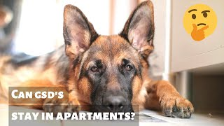 Can German Shepherd Dogs live in an Apartment?