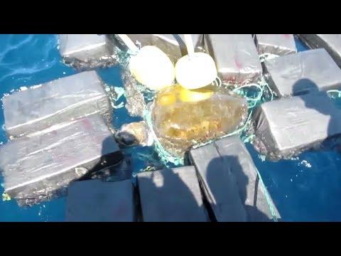 800 кг кокаина: моряки освободили черепаху из плена наркотиков