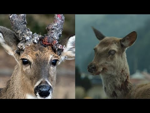 Stop Worrying About Zombie Deer