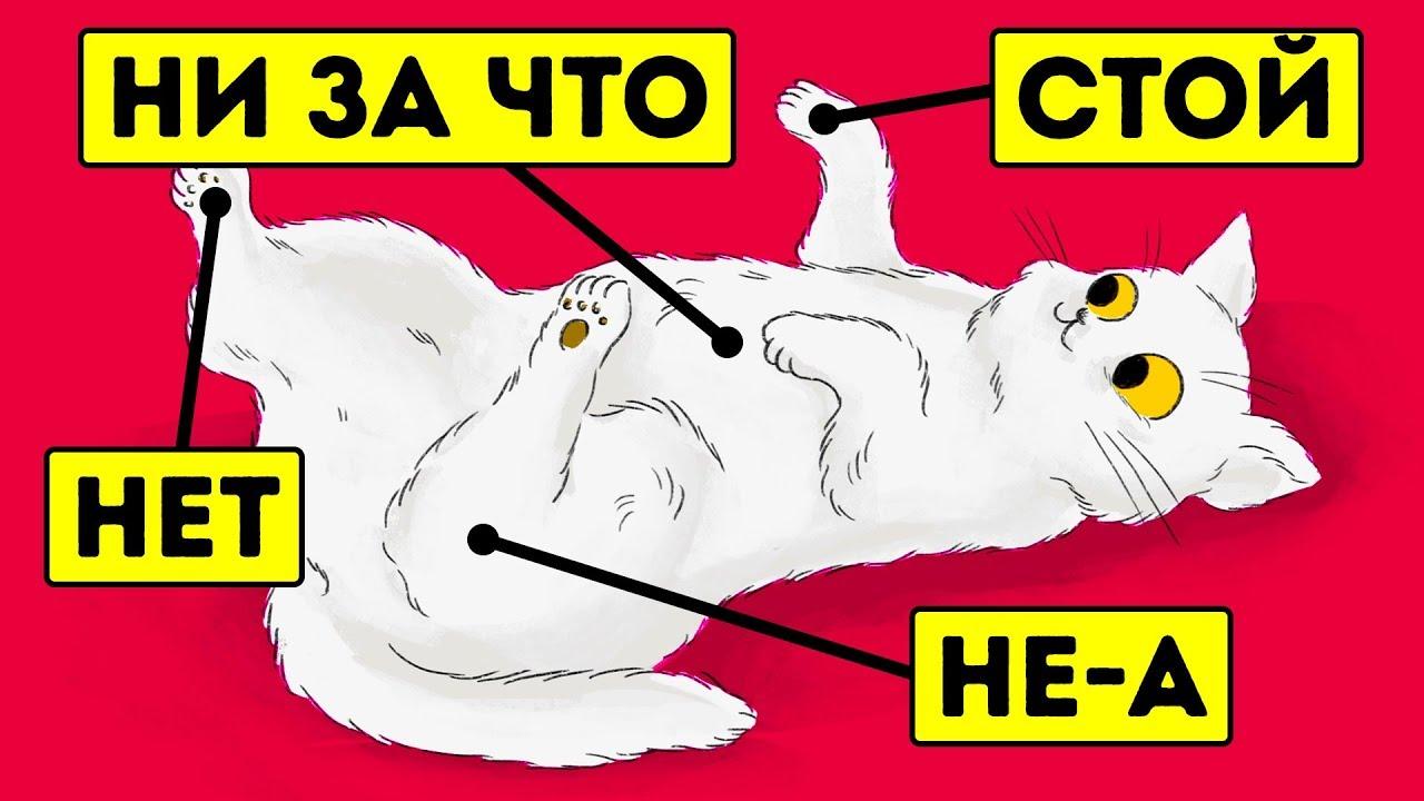 15 вещей, которые кошки не любят, но не могут об этом сказать