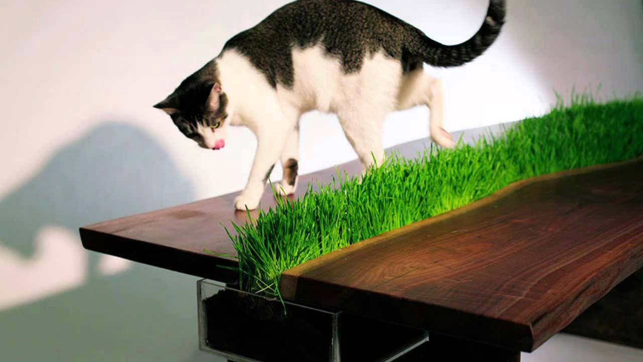 Awesome Furniture Design Ideas For Cat Lovers   SISSI THE RED CAT   YouTube