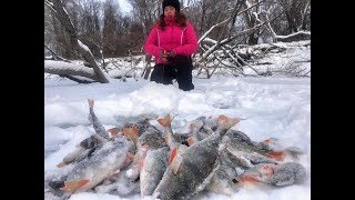 ВЗЯЛ МАШУ НА ДИКИЙ КЛЕВ ОКУНЯ НА БАЛАНСИР Рыбалка на Алтае коряги безмотылка ловля язя