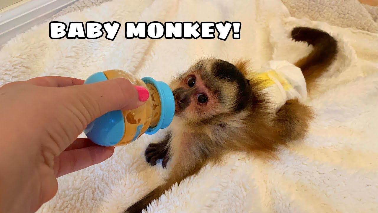 NEW BABY MONKEY AT MY HOUSE! WHERE'D HE COME FROM?!