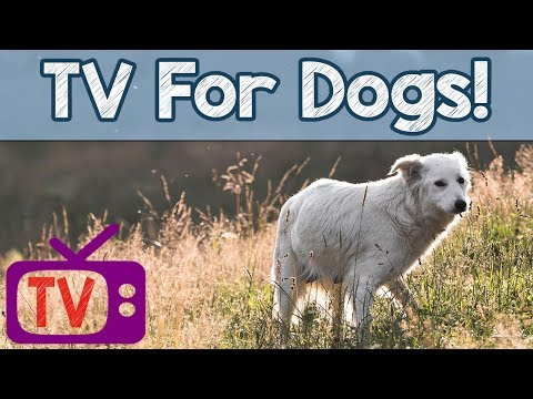 Dog TV - Relaxing TV For Dogs - Helped over 4 million Dogs Worldwide -with calming Therapy Music