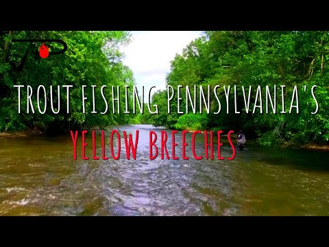 Yellow Breeches Evening Trout Fishing