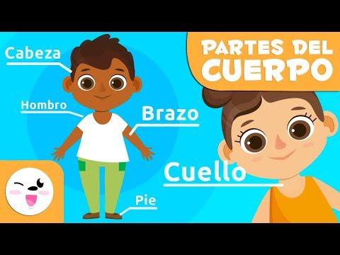 Las Partes Del Cuerpo Humano Para Niños | Vídeos Educativos Para Niños