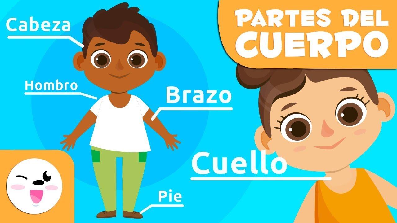 Las Partes Del Cuerpo Humano Para Niños Vídeos Educativos Para