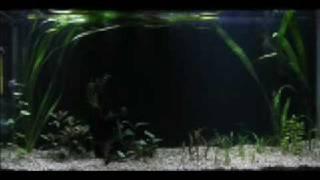 Diy Led Aquarium Light