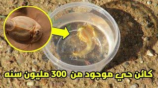 الدغلوب كائن حي موجود منذ ٣٠٠ مليون سنه