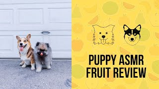 Puppy ASMR: Corgi and Keeshond Dogs Review Fruit