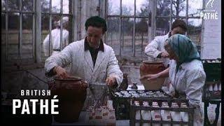 Goat Farm (1956)