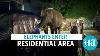 Watch: Two wild elephants enter residential area in Kerala's Munnar