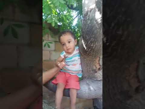 Na Árvore de Siriguela da Vovó Madalena