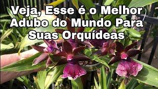 Melhor Adubo Do Mundo Para As Orquídeas