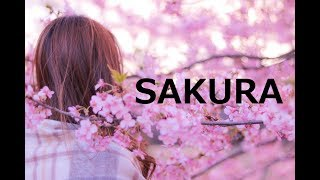 【SAKURA/いきものがかり】歌詞付き(カバー)