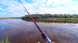 Дерзкие летние поклёвки Рыбалка на джиг в июне на реке Белые грибы и лисички после рыбалки