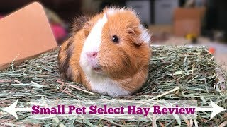 Small Pet Select Hay Review Youtube