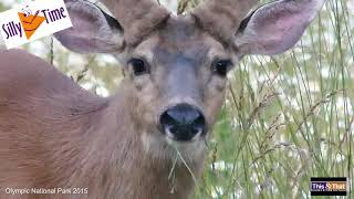 The Chewing Deer
