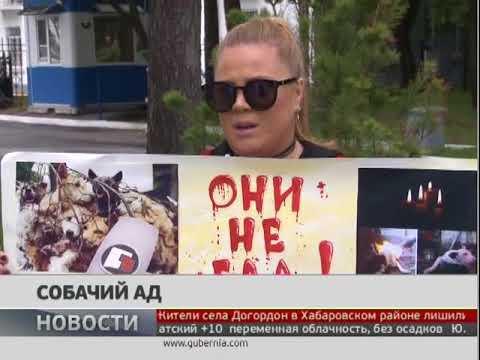 Одиночный пикет организовала зоозащитница возле Консульства Китая в Хабаровске. Новости. 27/06/2018
