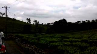 10 Acre Excellent Tea Estate For Sale In Aracode, Kil-Kotagiri, Ooty