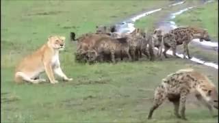 ТОП-5 жестокие бои животных,подборка.