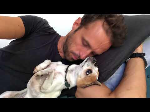 Pancho wants cuddles