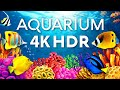 The Best Aquarium in 4K HDR 🐠 Calm & Relaxing Coral Reef Aquarium - Sleep Meditation 4K Screensaver