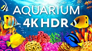 The Best Aquarium in 4K HDR 🐠 Calm & Relaxing Coral Reef Aquarium - Sleep Meditation 4K Screensaver