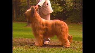 Briard  Pastor De Brie  ブリアード  AKC Dog breed series