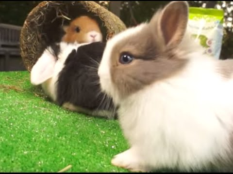 RABBITS  What we should  know before having a rabbit? Tips for children!