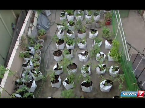 Brinjal garden maadi thottam organic terrace garden for Terrace vegetable garden ideas in tamil