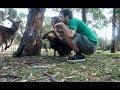 Capture de la vidéo The Mystery Of The Austrian Kangaroos