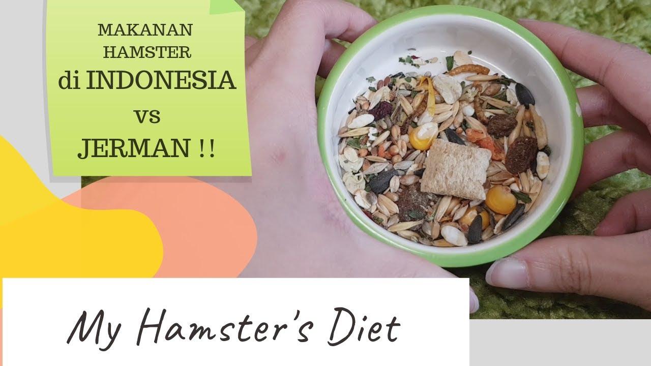 Makanan Hamster Sehari Hari Nya My Hamster S Diet Youtube