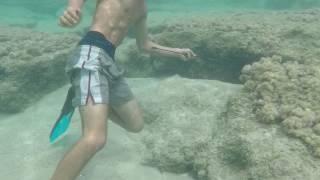 Хамаммет охота на осьминога с острогой