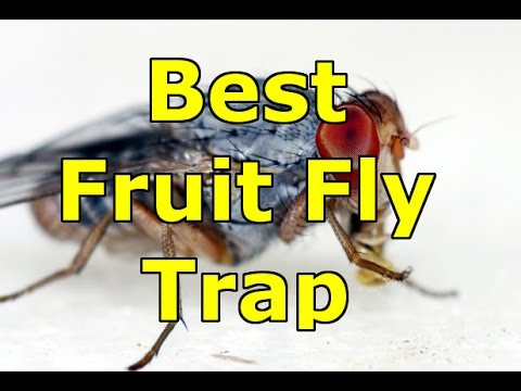 how to make a fruit fly trap youtube. Black Bedroom Furniture Sets. Home Design Ideas