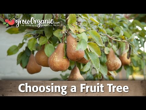 Organic Bare Root Fruit Trees - Selection Guide