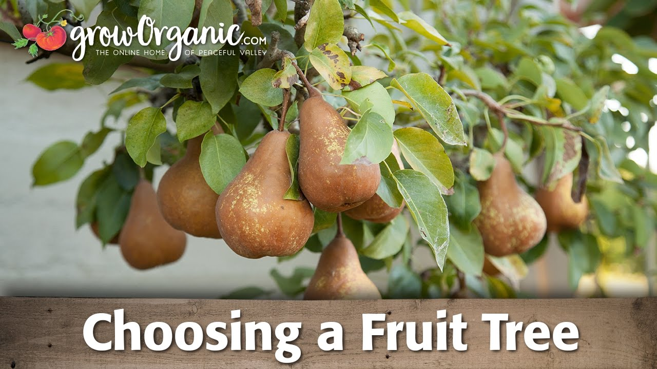 Organic Bare Root Fruit Trees Selection Guide Youtube