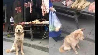 """Được chủ quầy thịt cứu mạ.ng 4 năm trước, chó vàng ngày nào cũng tới """"trả ơn"""""""