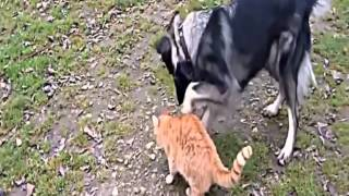 Кошки против собак 2013