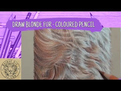 Draw Realistic Blonde Golden Fur using Colored Pencils thumbnail