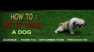 puppyblog1-How To Potty Train a Puppy ♥ 4 EASY STEPS ♥-puppyblog1