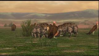 Cheetah vs Hyenas vs Vultures