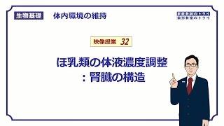 【生物基礎】 体内環境の維持32 ほ乳類の体液濃度調節:腎臓の構造 (14分)