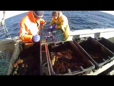 Lobster Fishing, Yarmouth, SW Nova Scotia 2015