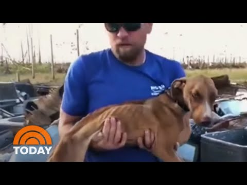 Kristin Lessard & Steve Kelly  - Miracle Dog Survives 3 Weeks in Rubble after Hurricane Dorian!