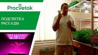 Подсветка рассады - светодиодные фитолампы для растений. Обзор. Какую выбрать?